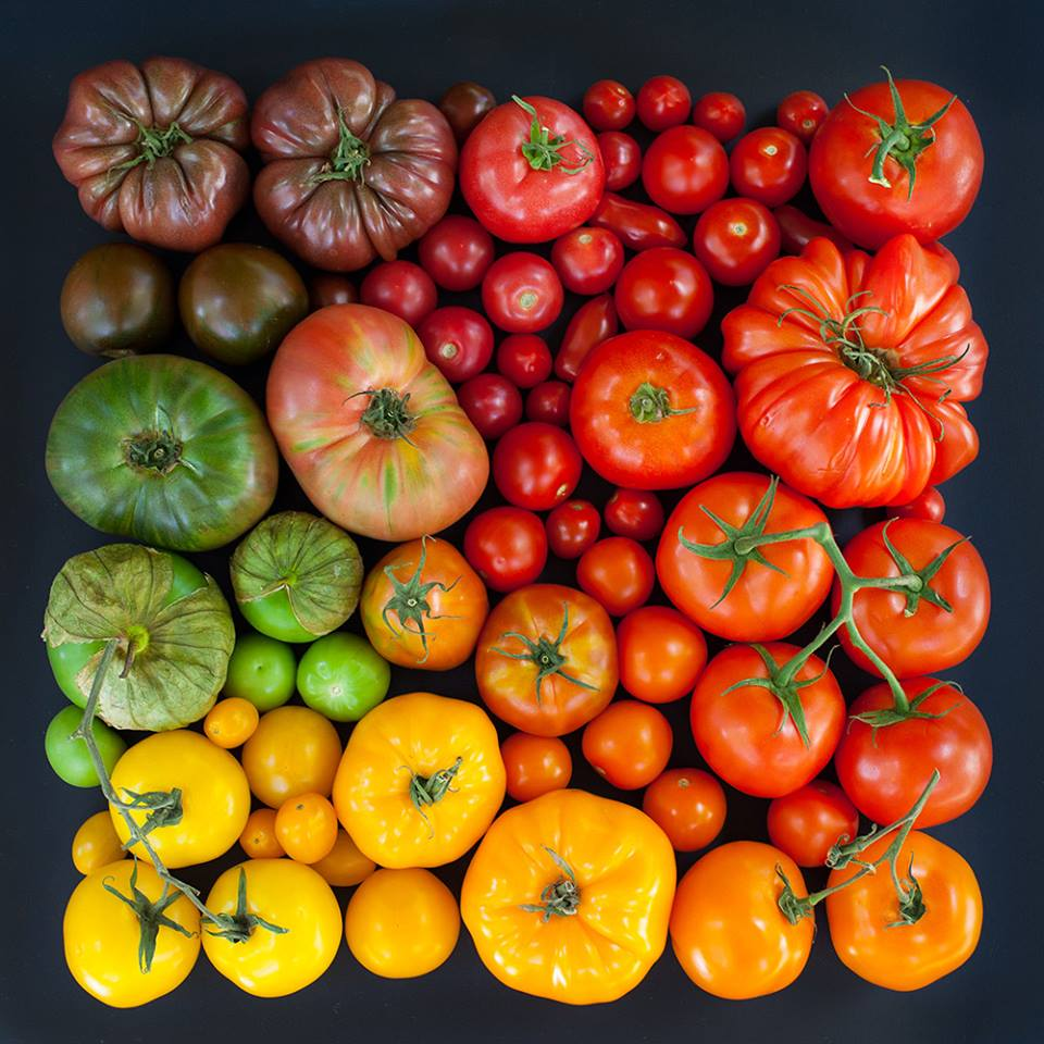 *( Tomates !