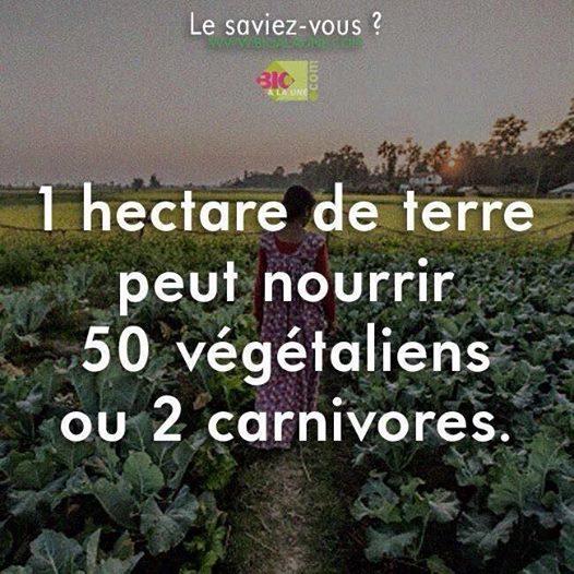 * Un hectare de terre peut nourrir 50 végétaliens ou 2 carnivores